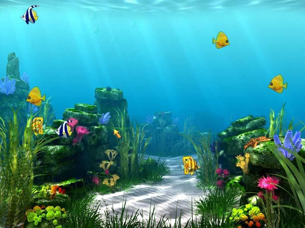 Tropical Fish Shop - Annabel's Adventure